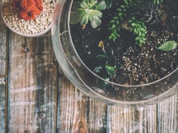 Succulent terranium